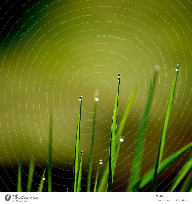 Spitzentanz II Gras Wiese nass grün rund durchsichtig Miniatur ökologisch tief unten Naturliebe ruhig Erholung frisch Halm Makroaufnahme Nahaufnahme Rasen Seil