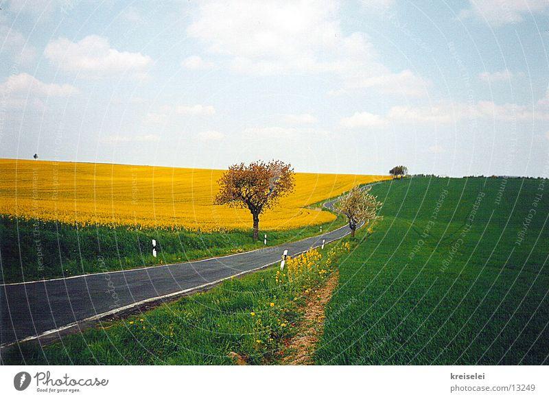 so grün Natur Himmel ruhig Straße Feld Raps Rapsfeld