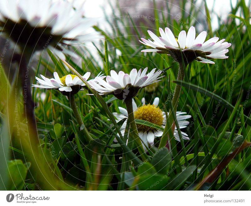 Mäuschenperspektive... Himmel grün weiß Baum Blume gelb Blüte Frühling Wiese Gras braun Park Blühend Schönes Wetter Bodenbelag Rasen