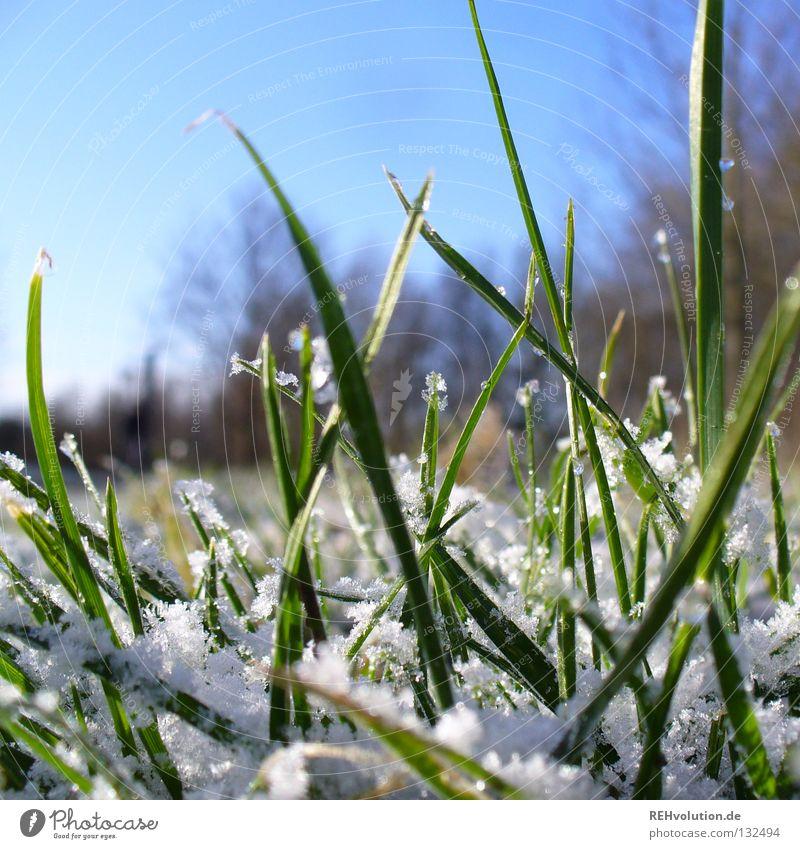 aprilwetter Gras Wiese Morgen Wegrand Spaziergang Winter Frühling tauen kalt nass frieren Baum grün Schnee Wege & Pfade Wassertropfen blau Himmel Rasen