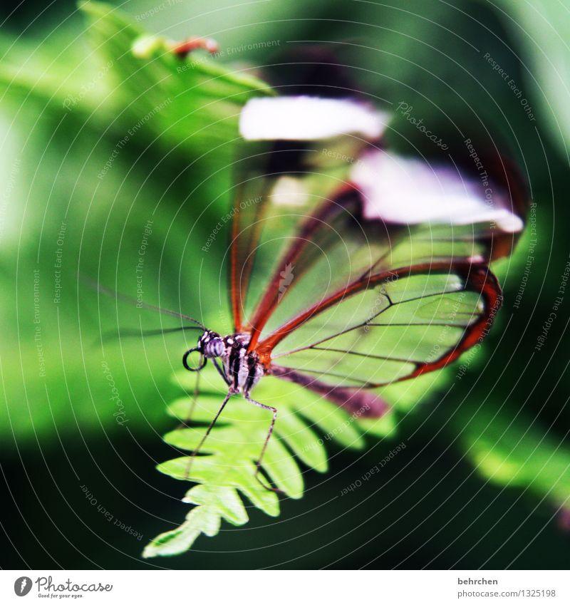 zittrig Natur Pflanze grün schön Sommer Erholung Blatt Tier Frühling Wiese klein Garten außergewöhnlich fliegen Park elegant