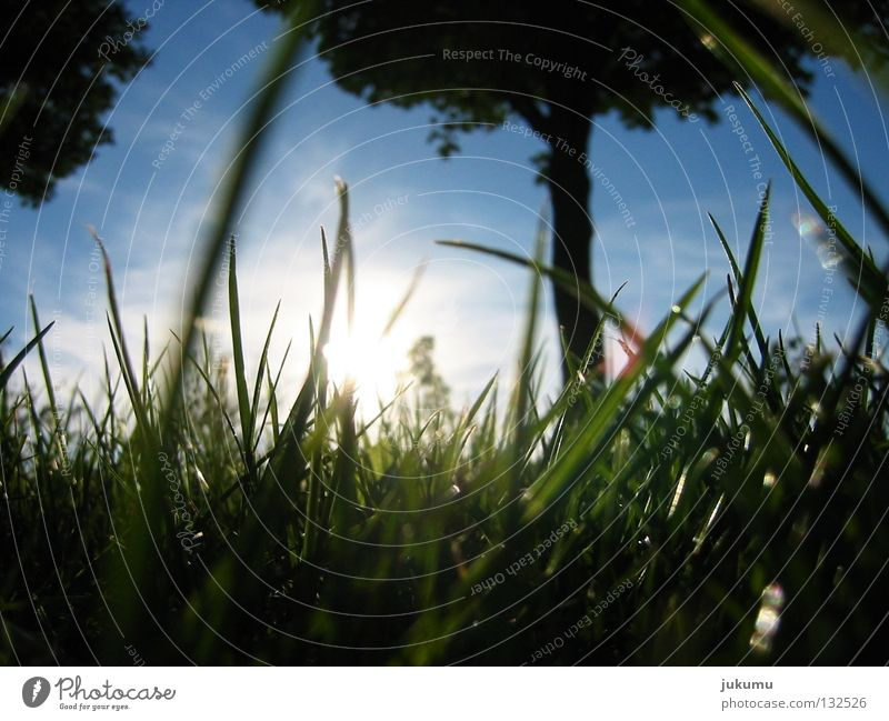 frühling Himmel Baum Sonne Ferien & Urlaub & Reisen Erholung Wiese Gras Frühling Frühlingsgefühle