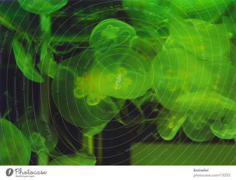 quallengewirr Wasser grün schwarz Verkehr Qualle Außerirdischer utopisch