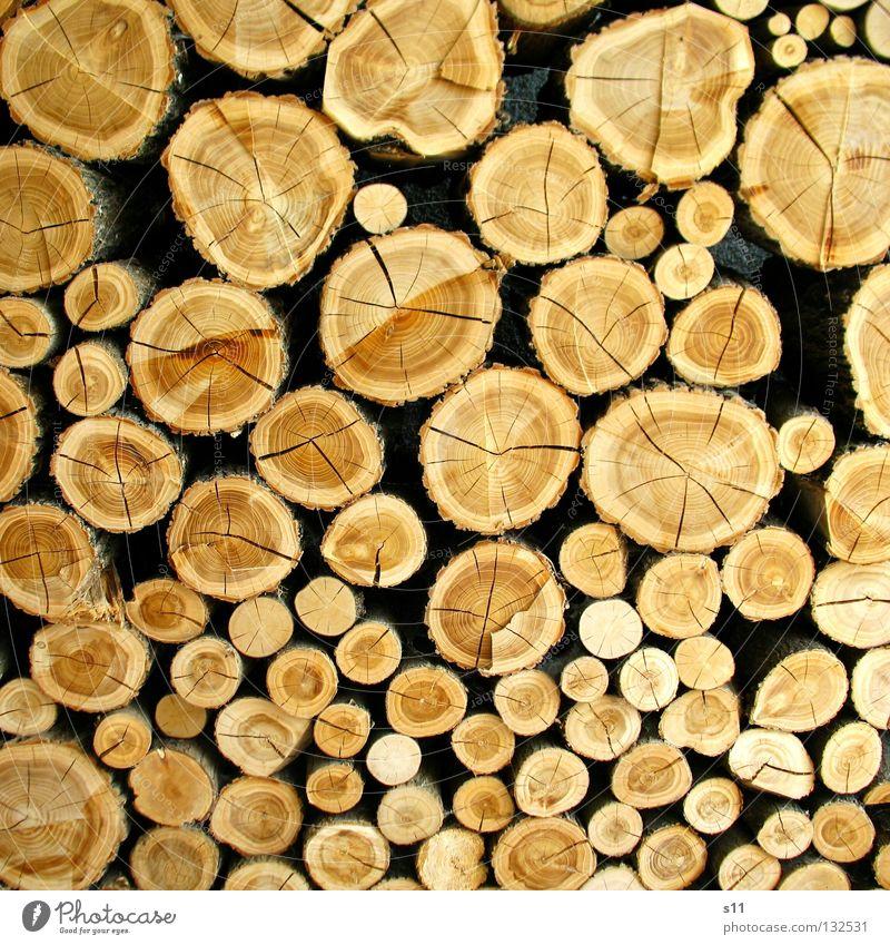 °Oo°oO Natur Baum Holz Linie braun Ordnung Dekoration & Verzierung rund Brand Baumstamm Riss beige Blattadern Spalte Haufen heizen