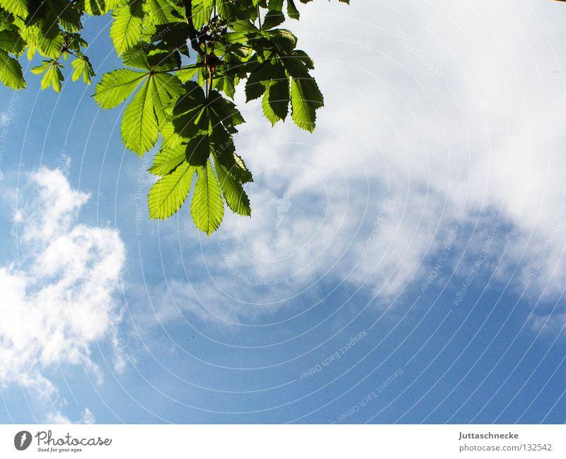 Die unendliche Leichtigkeit des Seins Blatt Baum Kastanienbaum Kastanienblatt Beleuchtung durchscheinend Wolken grün Erholung Frühling sprießen Wachstum Leben