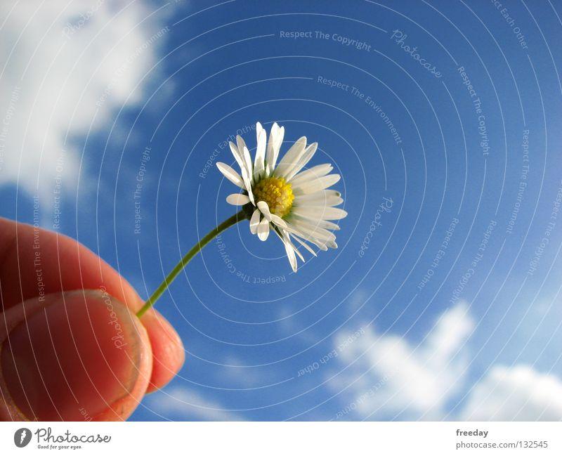 ::: Ich liebe dich! ::: Himmel Natur blau Hand grün schön Ferien & Urlaub & Reisen Sommer Blume Freude Wolken Einsamkeit Ferne gelb Leben Gefühle