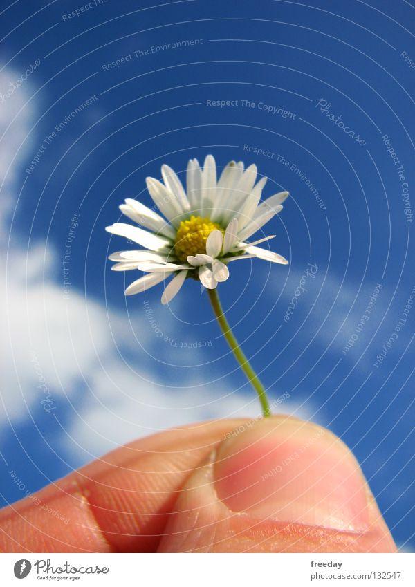 ::: Ich liebe dich ³ ! ::: Blume Unikat Gras Gänseblümchen Sommer Frühling klein gelb Götter Heiratsantrag Romantik Wolken Geborgenheit Sehnsucht Einsamkeit