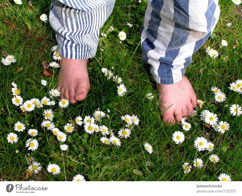 Die Hose bringts! Barfuß Zehen Hosenbeine Streifen gestreift Wiese Gras Gänseblümchen Blume stehen Kinderfuß Gesundheit grün weiß Junge Freude Sommer Fuß Beine