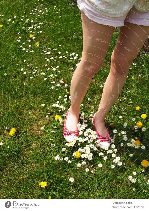 Milchstraße Schuhe rot grün Gänseblümchen Löwenzahn Wiese schön Schönes Wetter Blume Blumenteppich Flowerpower Hippie stehen gehen Wade fest Shorts Freude