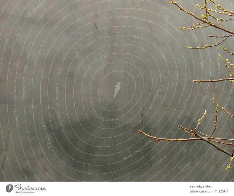 zaghaft puristisch. Baum minimalistisch Beton Einsamkeit Strukturen & Formen laublos Winter Herbst Raum ruhig Trauer Langeweile dunkel trist Geäst braun Park