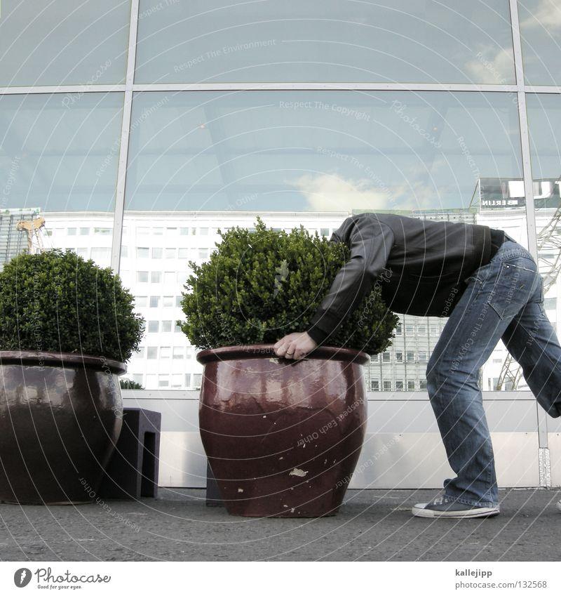 naturlocken Mann Topf grün Hotel Eingang Einfahrt Sträucher Pflanze Wachstum Reifezeit Strauß kopflos blind Suche Lifestyle Mensch Comic Haare & Frisuren