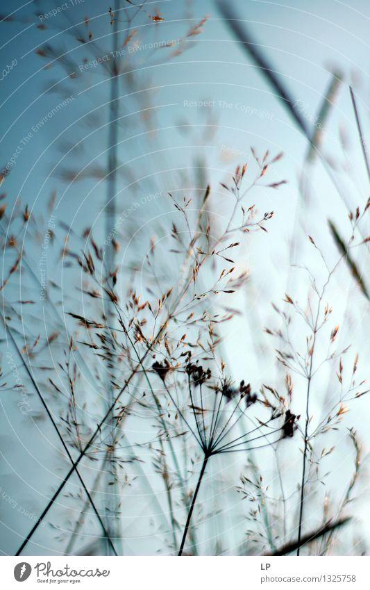 blau 9 Umwelt Natur Pflanze Tier Urelemente Luft Klima Schönes Wetter Blume Gras Wildpflanze exotisch Garten Park Wiese Feld Gefühle Stimmung Fröhlichkeit