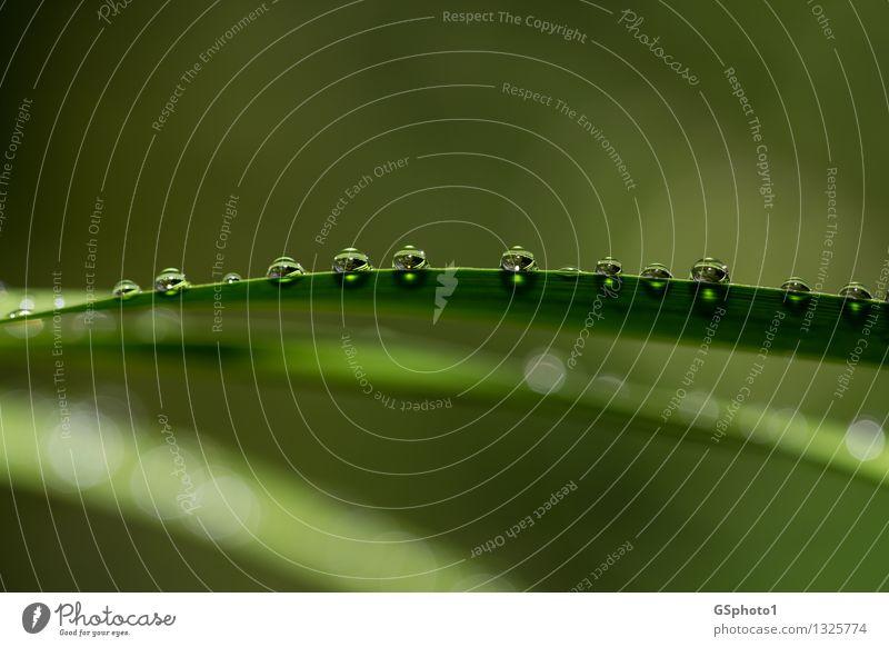 Wasserperlen Natur Wassertropfen Sommer Pflanze Blatt ästhetisch glänzend grün ruhig Esoterik Stimmung Lichtpunkt Sonne Farbfoto Außenaufnahme Nahaufnahme
