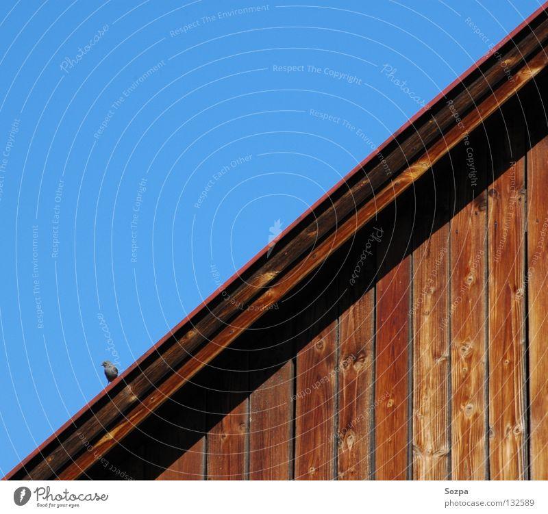 Diagonale Himmel blau Haus Leben Holz Vogel Dach diagonal