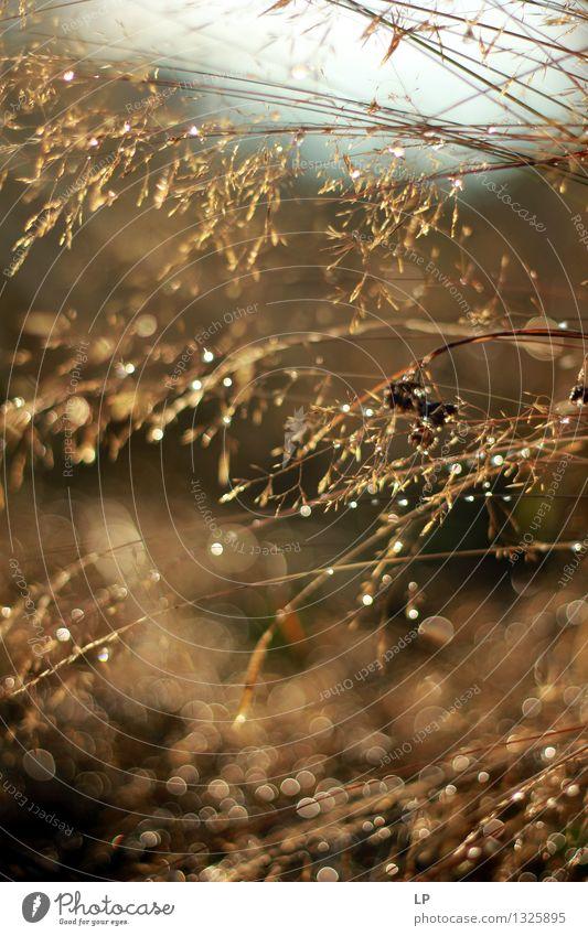 Natur Ferien & Urlaub & Reisen Pflanze schön Wasser Umwelt Wärme Gefühle Wiese Gras feminin Garten Stimmung Park wild Wassertropfen