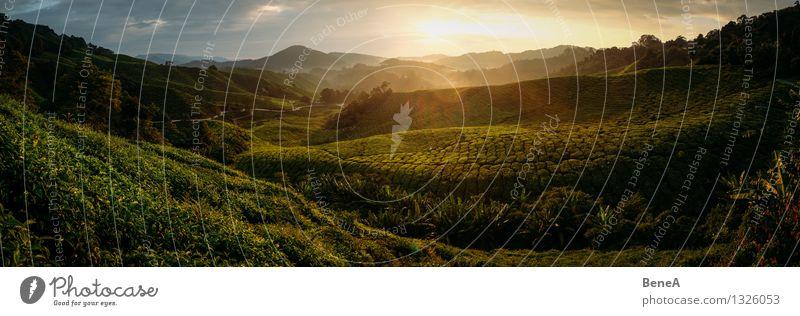 Teeplantage Natur Pflanze grün Sonne Erholung Landschaft ruhig Ferne natürlich Feld Wachstum Idylle Sträucher groß Hügel Landwirtschaft