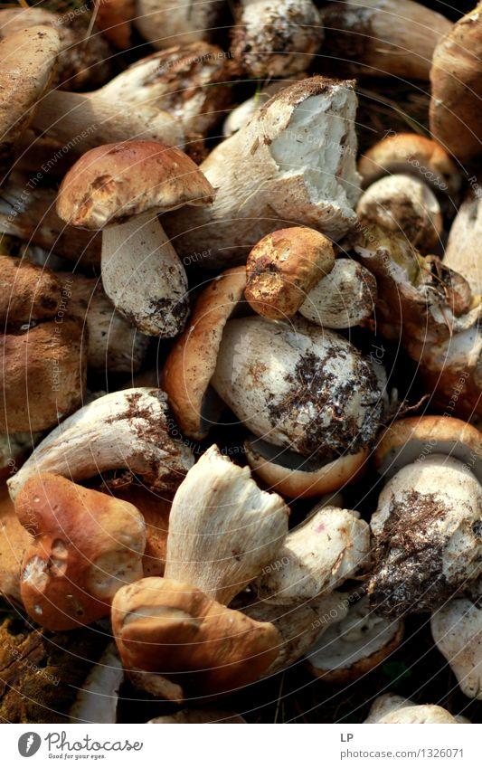 Natur schön Umwelt Gefühle Lifestyle Lebensmittel wild Freizeit & Hobby Ernährung Bioprodukte Pilz Diät Vegetarische Ernährung Fasten Wildpflanze