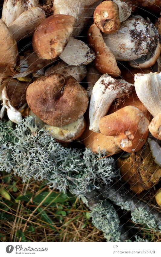 Sträucher Lebensmittel Gemüse Pilz Pilzhut Ernährung Bioprodukte Vegetarische Ernährung Lifestyle Wellness Ferien & Urlaub & Reisen Erntedankfest Umwelt Natur
