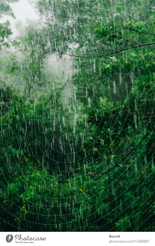 Rainforest Natur Pflanze Wasser Baum Landschaft Wolken Wald Umwelt Regen Wetter Nebel Sträucher Wassertropfen Klima nass Urelemente