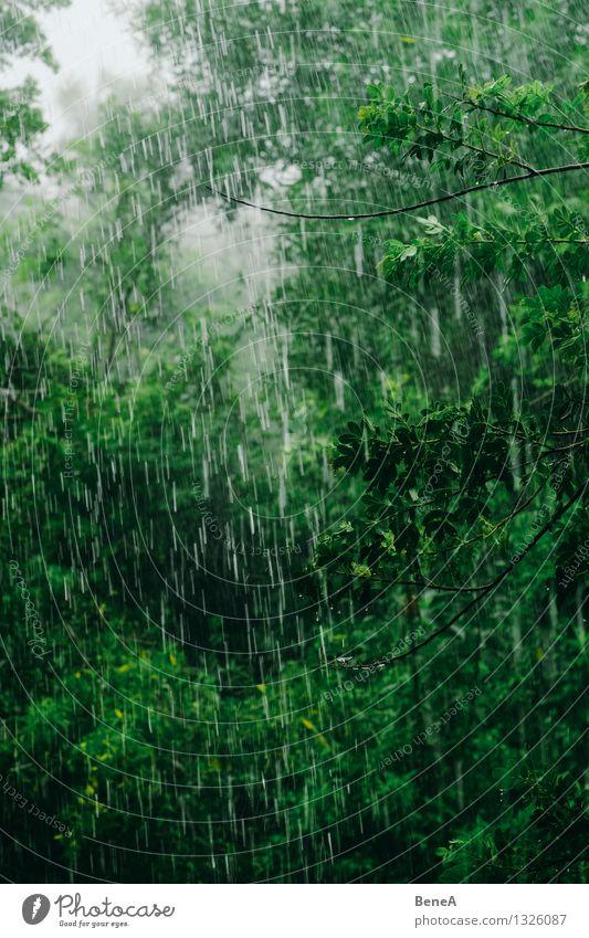 Rainforest Umwelt Natur Landschaft Pflanze Urelemente Wasser Wassertropfen Wolken Wetter schlechtes Wetter Nebel Regen Baum Sträucher Grünpflanze Wildpflanze