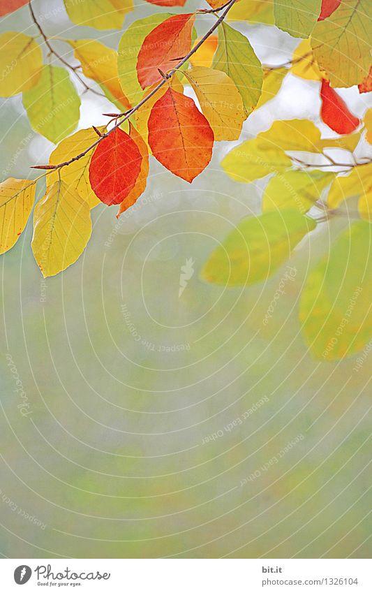 Vitamine für den Herbst Natur Ferien & Urlaub & Reisen Pflanze Baum Blatt Wald Wärme Garten Zeit Stimmung Park orange Wind Vergänglichkeit Wandel & Veränderung