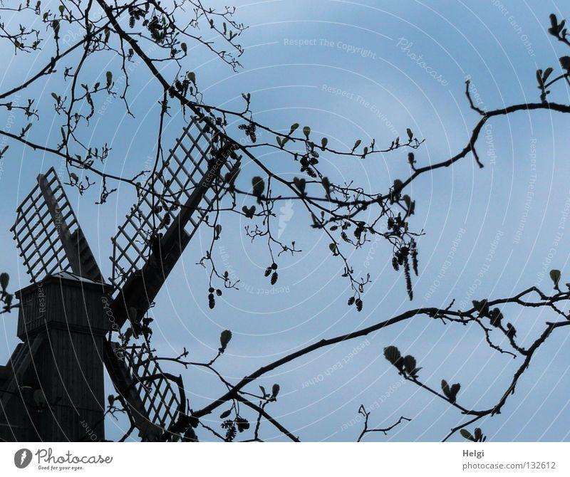 beflügelt... Himmel Baum grün Blatt Blüte Frühling Holz braun groß Dach Denkmal historisch drehen antik rotieren streben