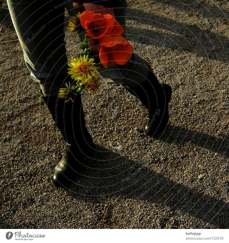 my girl Frau Mensch rot Sommer Blume Erholung gelb Garten Wege & Pfade Stein Frühling Beine Park Freizeit & Hobby gehen Wachstum