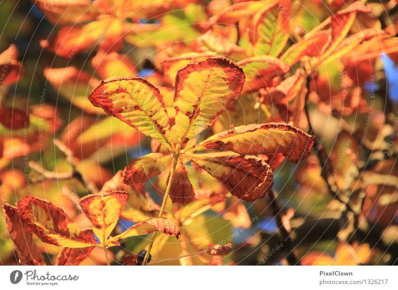 Herbst Natur Pflanze schön Baum Landschaft Blatt ruhig Tier Wald Garten braun Stimmung Park orange träumen