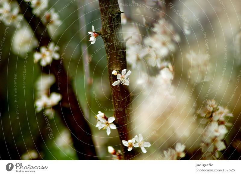 Es blüht Natur schön Baum Farbe Blüte Frühling Umwelt Wachstum Ast zart Duft Zweig gedeihen
