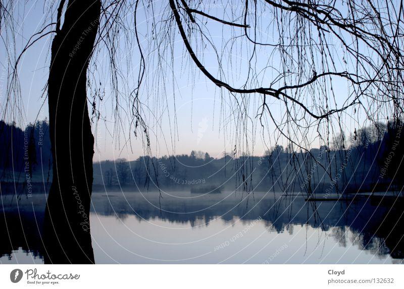 Ruhe des Wassers Teich ungestört See Baum Gegenlicht ruhig Frieden Morgen Spiegel Spiegelbild Verlauf Einsamkeit Ast Linie Silhouette blau Insel Natur