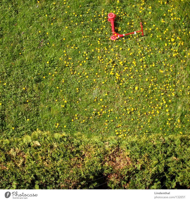 Roller im Löwenzahn II rot Sommer Wiese Gras Hecke Tretroller