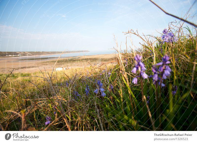 Strand Umwelt Natur Landschaft Sand Wasser Himmel blau braun mehrfarbig gelb grün violett rosa schwarz weiß Gras England Ferien & Urlaub & Reisen