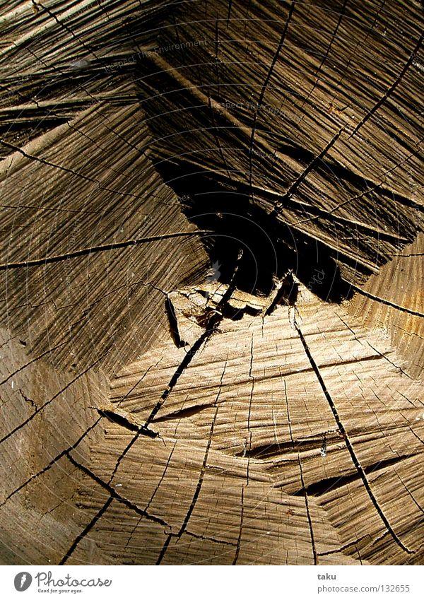 WOOD Holz Baum Baumstamm Trommel geschnitten Faser Jahresringe braun hellbraun dunkelbraun Baumrinde Nachmittag Garten Haarschnitt Riss Strukturen & Formen