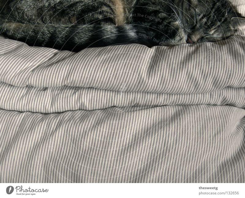 Prinzessin auf der Erbse ruhig Erholung träumen Katze Wärme Zufriedenheit schlafen Bett weich Frieden liegen Physik Idylle gemütlich Säugetier harmonisch
