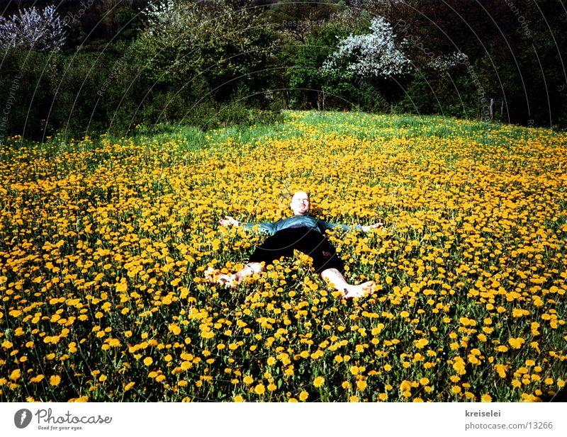 es blüht do schön... Blume grün gelb Erholung Wiese Blühend Löwenzahn