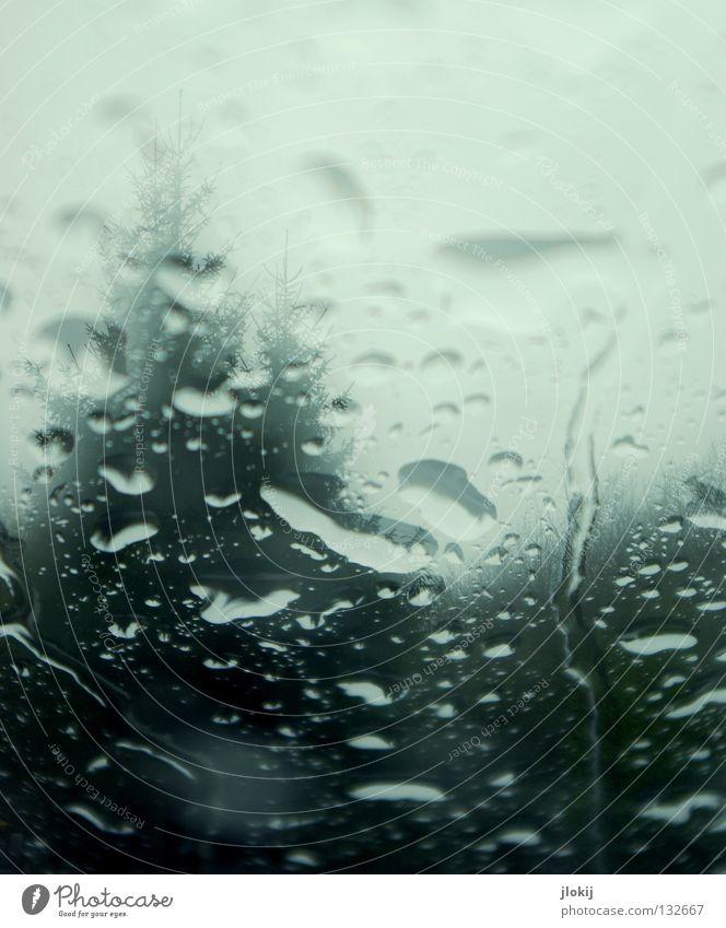 Drops Fenster Schnee Gegend Baum Gras Wiese Nadelbaum Nadelwald Biotop Natur Winter Jahreszeiten Holzmehl Feld Doppelbelichtung Experiment Gewitter Regen