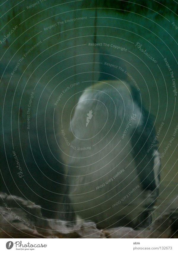... stillgestanden ... grün gefährlich ruhig Angst furchtbar geheimnisvoll dunkel dunkelgrün hässlich nah Zoo exotisch gruselig Thriller Gewässer Teich See Meer
