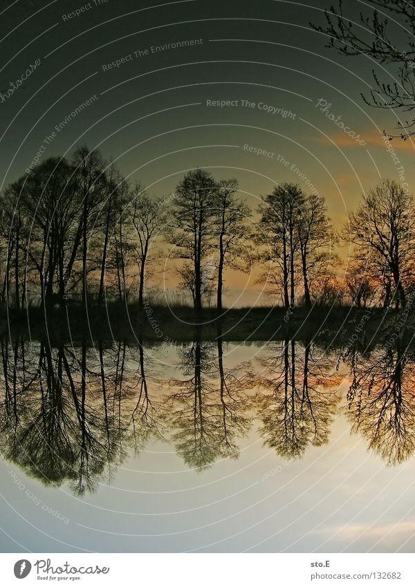 doppelt sehen Baum Natur Pflanze ruhig Wolken schlechtes Wetter Verlauf Farbverlauf Sonnenuntergang Dämmerung Horizont See Bach Lebensformen Baumstamm Baumkrone