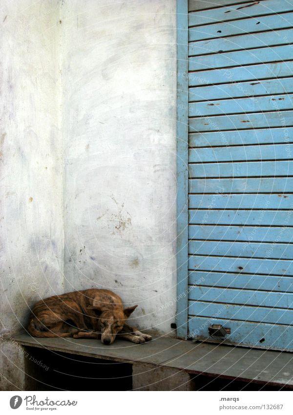 Pause schlafen Siesta Halbschlaf zurückziehen Hund Tier Haustier Mischling Wand weiß Udaipur Indien Sommer Säugetier liegen abliegen Müdigkeit bequem Erholung