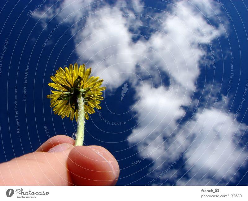 Floralerlebnis (100) Blume Löwenzahn gelb grün Stengel Hand Finger Daumen Zeigefinger Fingernagel Wolken Hautfarbe Blüte Blütenblatt Licht Muster Pflanze