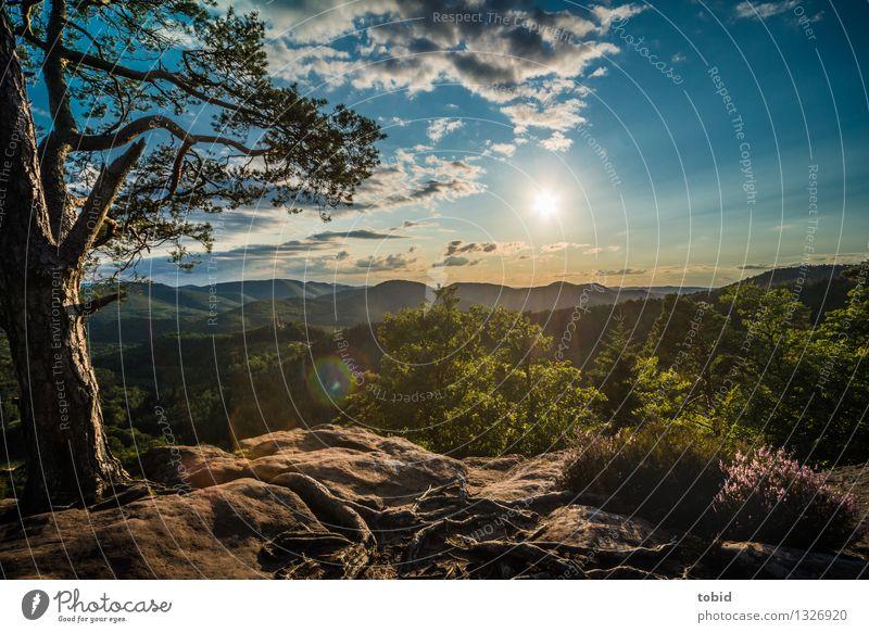 Schöne Aussichten Natur Landschaft Pflanze Himmel Wolken Horizont Sommer Schönes Wetter Baum Gras Sträucher Wald Hügel Berge u. Gebirge Gipfel außergewöhnlich