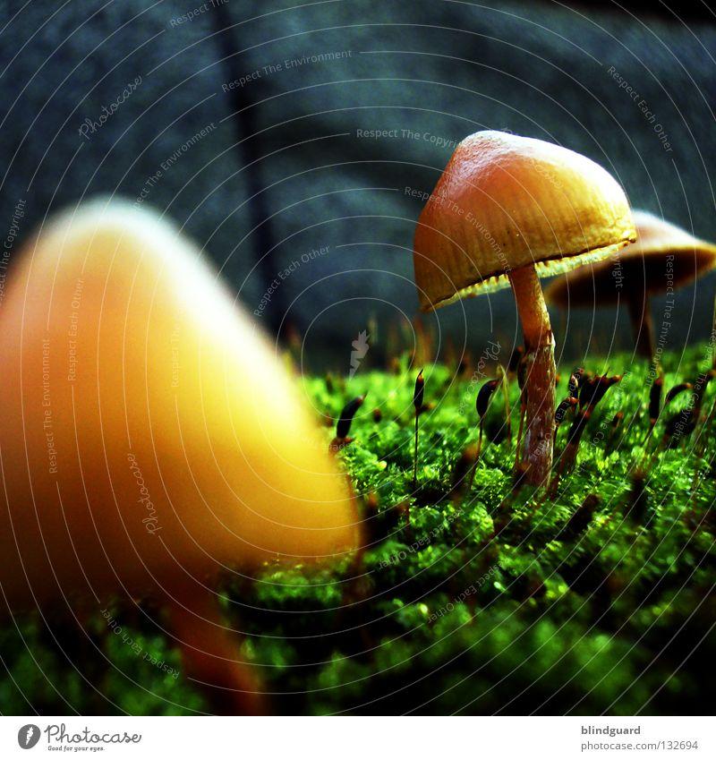 Last View To The Mushroomplanet Natur grün Pflanze gelb Leben Herbst Wand Mauer Park klein Umwelt Wachstum Blühend Weltall Sonnenschirm Pilz