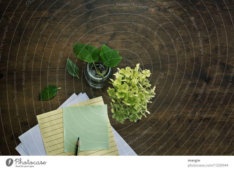 Mir fällt nichts ein... Dekoration & Verzierung Schreibtisch lernen Büroarbeit Arbeitsplatz sprechen Pflanze Blume Blatt Blüte Hortensienblüte Schreibwaren