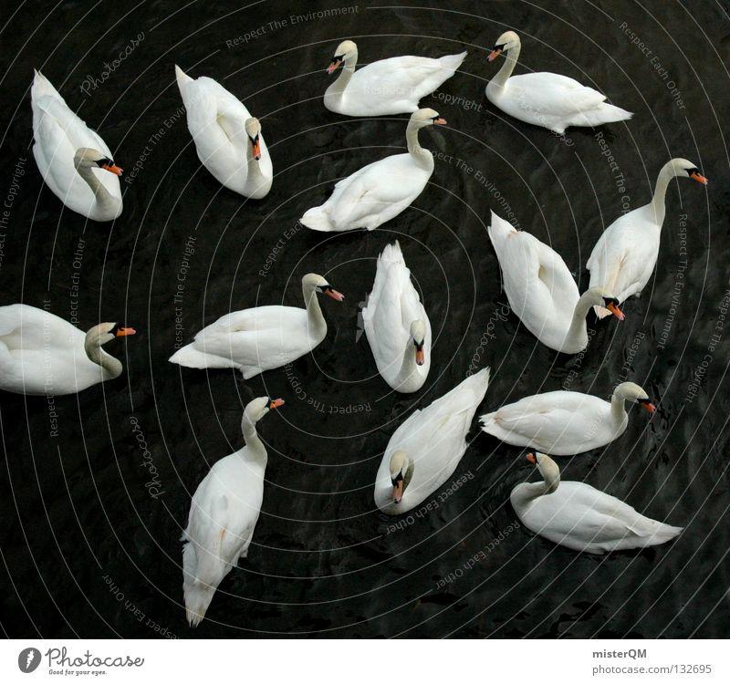 Lost. Schwan weiß dunkel See Schnabel Wasser ruhig Teich Romantik was verkuppeln Flirten Treue Symbole & Metaphern Yin und Yang Vogel rot Feder Partnerschaft