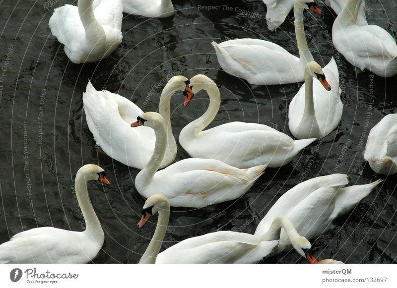 And Found. alt Wasser weiß rot Farbe Tier ruhig Erholung Liebe dunkel Gefühle grau See Freundschaft Vogel Schwimmen & Baden
