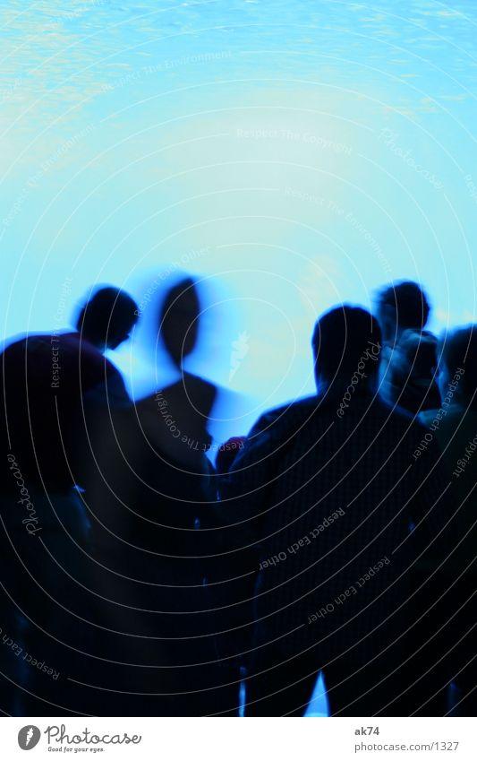 Hier gibts nichts zu sehen Gegenlicht Mensch kalt Aquarium Menschengruppe blau