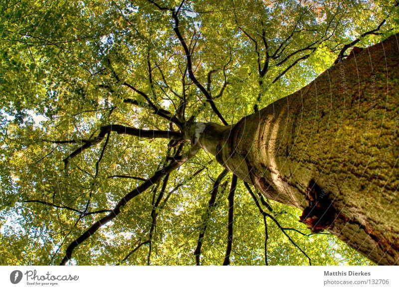 Tree grün schön Baum Sommer Blatt Wald dunkel Herbst Freiheit oben Holz Wege & Pfade Luft Regen hell Beleuchtung
