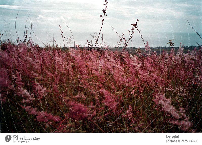 Der Wind bläst! Natur Himmel rot Gras Landschaft Feld