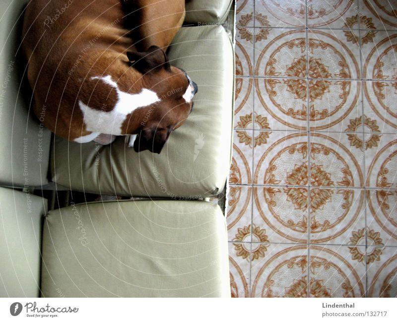Boxerpause Erholung Hund schlafen Pause Bodenbelag Sofa Säugetier Kissen