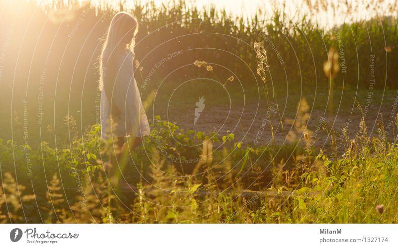 Summerlight Mensch Kind Natur Pflanze schön Sommer Erholung Mädchen Wärme Leben natürlich Glück glänzend Feld Kindheit blond